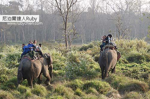 Elephant Safari的重點並不是在「坐」大象,而是以大象的氣味掩蓋人的,才能近距離觀察動物。