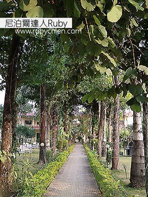 每天沿著這綠蔭步道走向我入住的舒適客房,心情都愉快了起來。