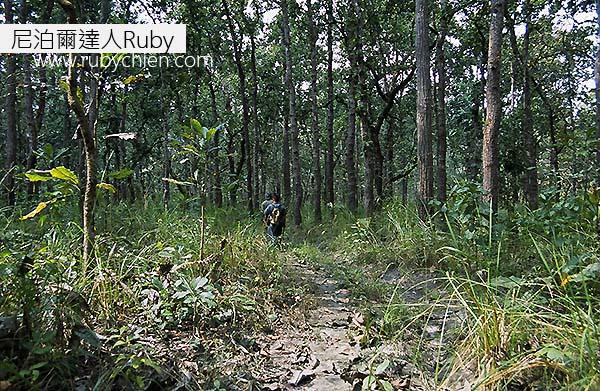 原始叢林與生態是奇旺最迷人之處。