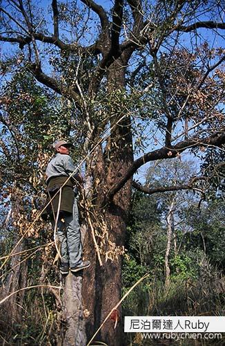 2001年,第一次的奇旺之旅,Chandu帶我們認識叢林,甚至還爬樹要找動物給我們看。
