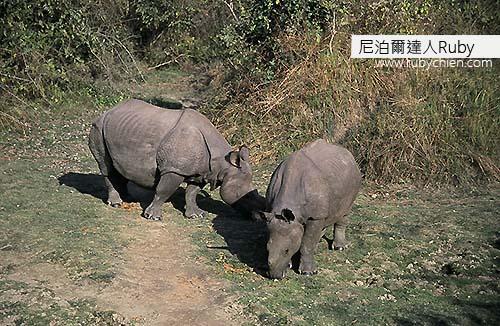 有了大象作為掩護,人們才能就近觀察犀牛